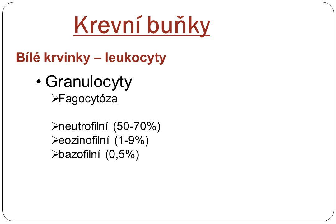 Bílé krvinky – leukocyty Granulocyty  Fagocytóza  neutrofilní (50-70%)  eozinofilní (1-9%)  bazofilní (0,5%) Krevní buňky