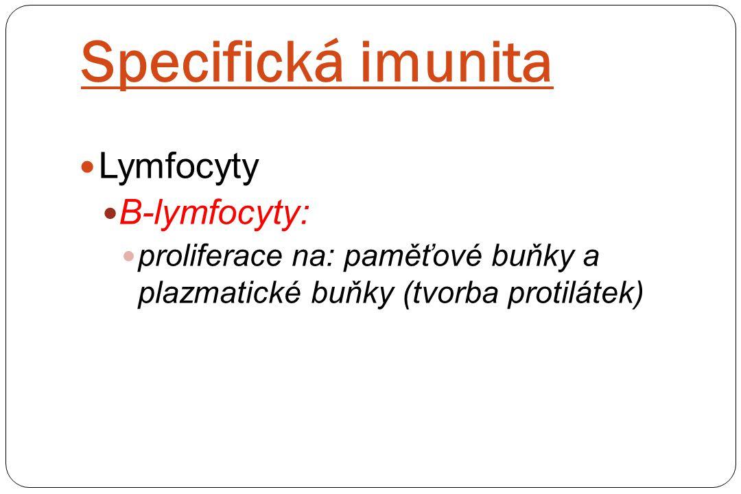 Specifická imunita Lymfocyty B-lymfocyty: proliferace na: paměťové buňky a plazmatické buňky (tvorba protilátek)