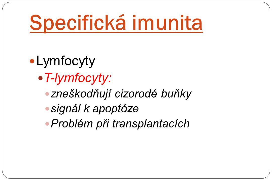 Specifická imunita Lymfocyty T-lymfocyty: zneškodňují cizorodé buňky signál k apoptóze Problém při transplantacích