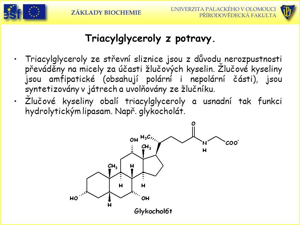 Triacylglyceroly z potravy. Triacylglyceroly ze střevní sliznice jsou z důvodu nerozpustnosti převáděny na micely za účasti žlučových kyselin. Žlučové