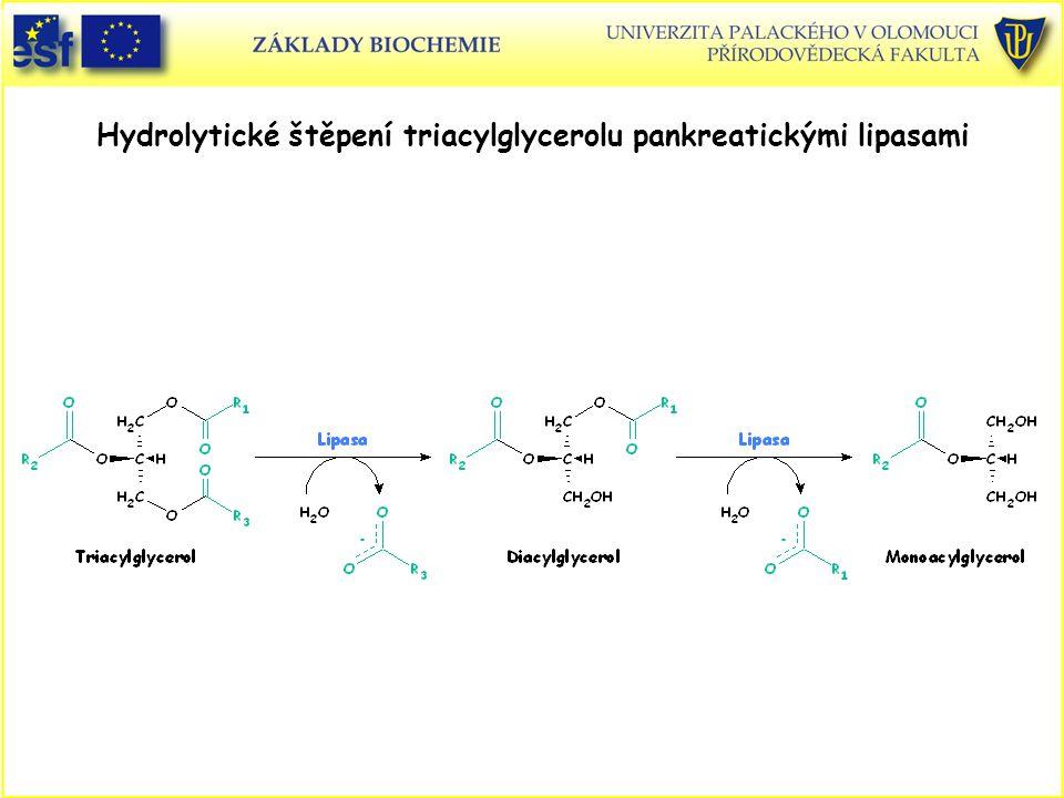 Hydrolytické štěpení triacylglycerolu pankreatickými lipasami