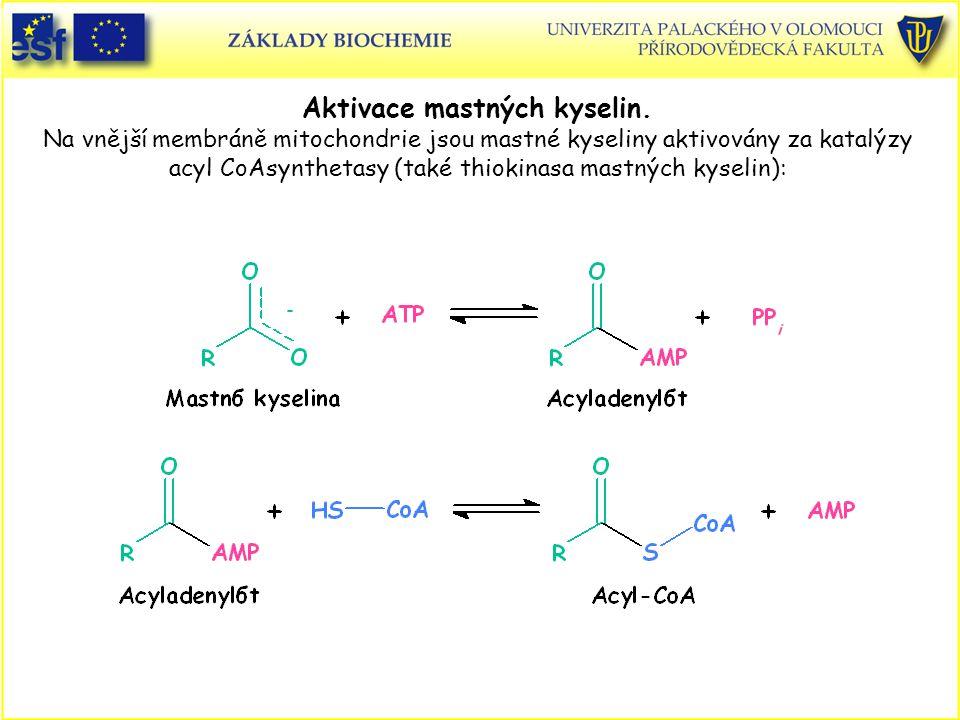 Aktivace mastných kyselin. Na vnější membráně mitochondrie jsou mastné kyseliny aktivovány za katalýzy acyl CoAsynthetasy (také thiokinasa mastných ky