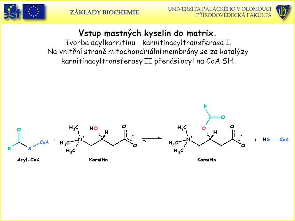 Vstup mastných kyselin do matrix. Tvorba acylkarnitinu – karnitinacyltransferasa I. Na vnitřní straně mitochondriální membrány se za katalýzy karnitin
