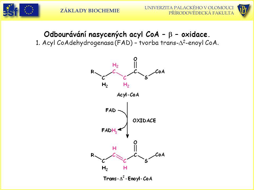 Odbourávání nasycených acyl CoA –  – oxidace.1.