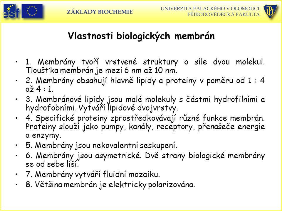 Řez plasmatickou membránou erythrocytu