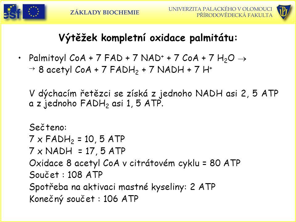 Výtěžek kompletní oxidace palmitátu: Palmitoyl CoA + 7 FAD + 7 NAD + + 7 CoA + 7 H 2 O   8 acetyl CoA + 7 FADH 2 + 7 NADH + 7 H + V dýchacím řetězci se získá z jednoho NADH asi 2, 5 ATP a z jednoho FADH 2 asi 1, 5 ATP.