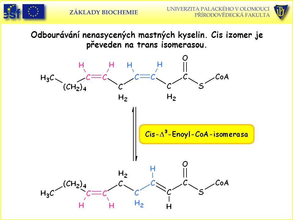 Odbourávání nenasycených mastných kyselin. Cis izomer je převeden na trans isomerasou.