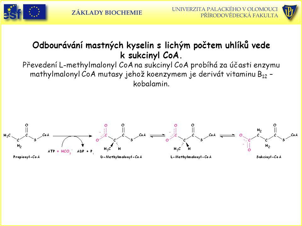 Odbourávání mastných kyselin s lichým počtem uhlíků vede k sukcinyl CoA. Převedení L-methylmalonyl CoA na sukcinyl CoA probíhá za účasti enzymu mathyl