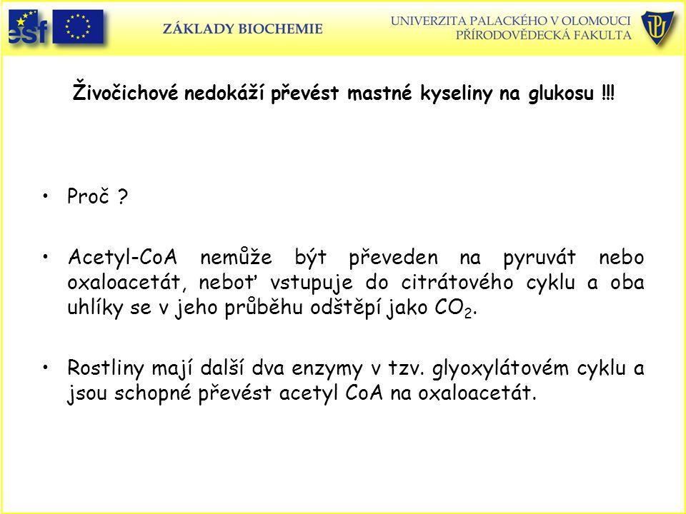 Živočichové nedokáží převést mastné kyseliny na glukosu !!! Proč ? Acetyl-CoA nemůže být převeden na pyruvát nebo oxaloacetát, neboť vstupuje do citrá