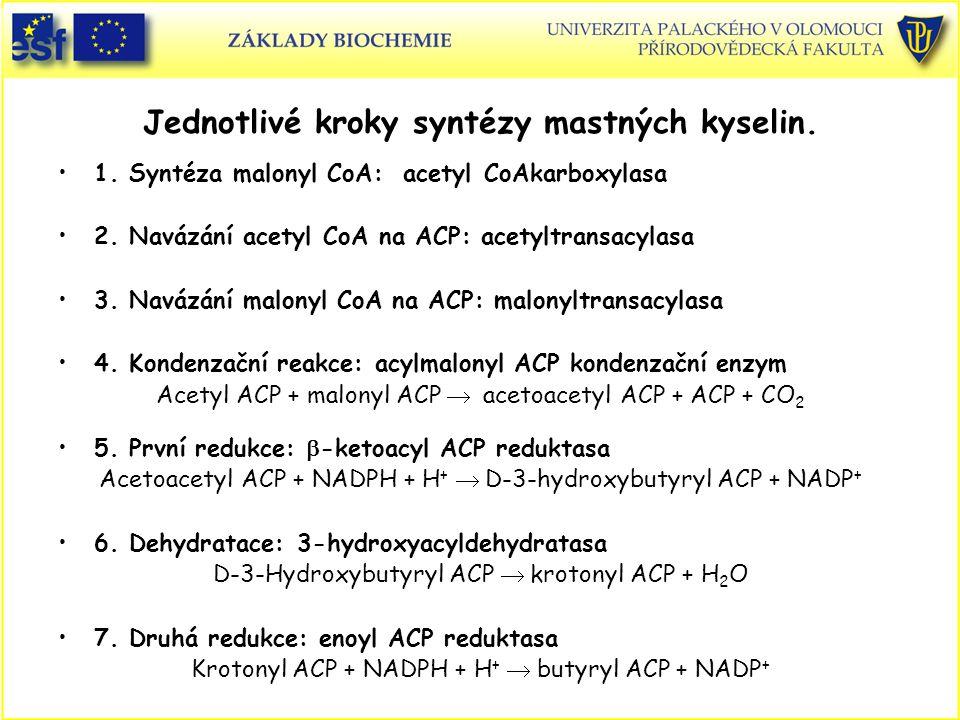 Jednotlivé kroky syntézy mastných kyselin.1. Syntéza malonyl CoA: acetyl CoAkarboxylasa 2.