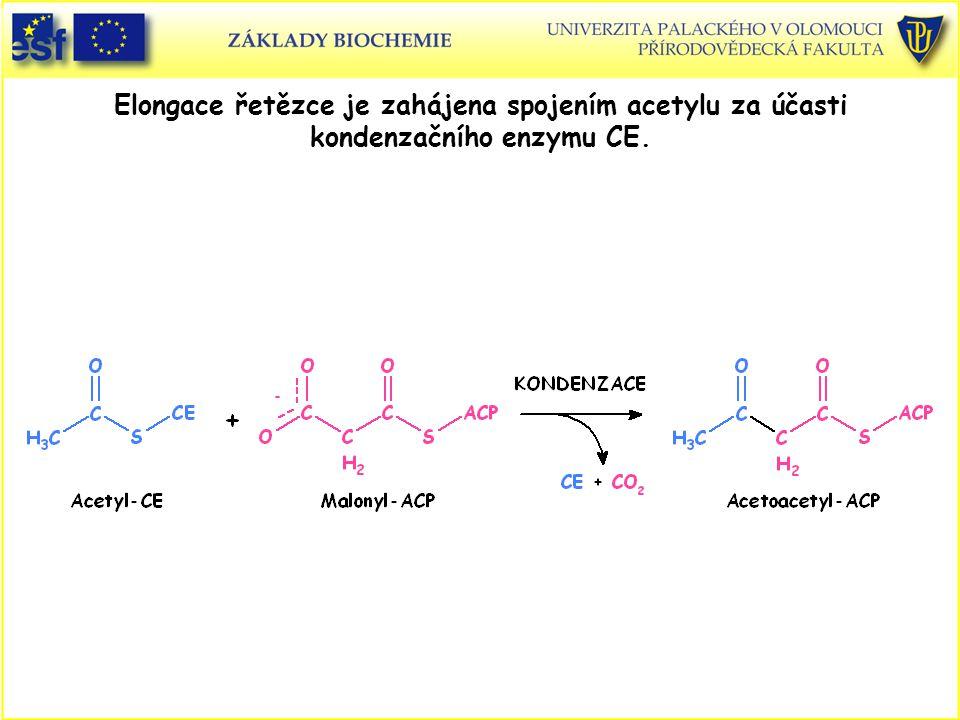 Elongace řetězce je zahájena spojením acetylu za účasti kondenzačního enzymu CE.