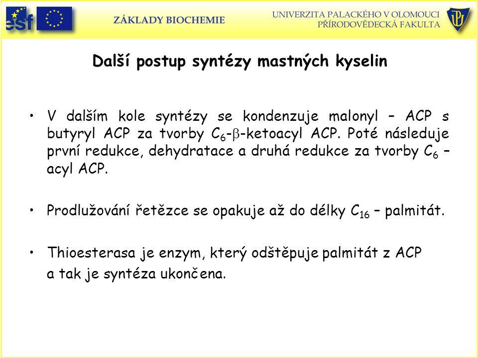 Další postup syntézy mastných kyselin V dalším kole syntézy se kondenzuje malonyl – ACP s butyryl ACP za tvorby C 6 -  -ketoacyl ACP. Poté následuje
