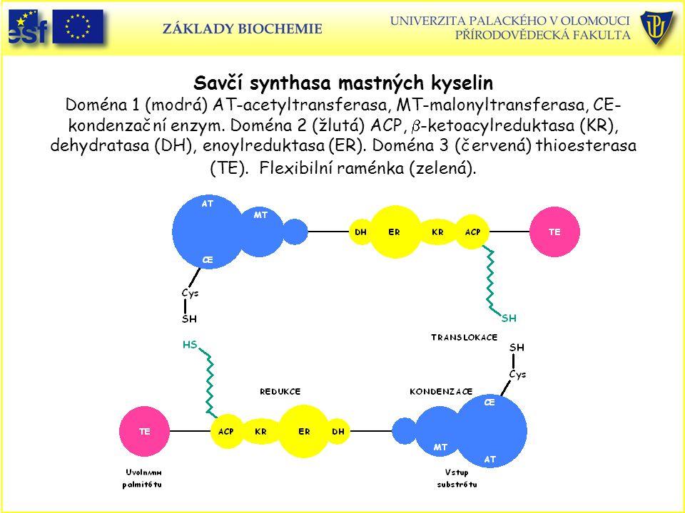 Savčí synthasa mastných kyselin Doména 1 (modrá) AT-acetyltransferasa, MT-malonyltransferasa, CE- kondenzační enzym. Doména 2 (žlutá) ACP,  -ketoacyl