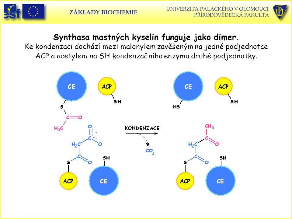 Synthasa mastných kyselin funguje jako dimer. Ke kondenzaci dochází mezi malonylem zavěšeným na jedné podjednotce ACP a acetylem na SH kondenzačního e