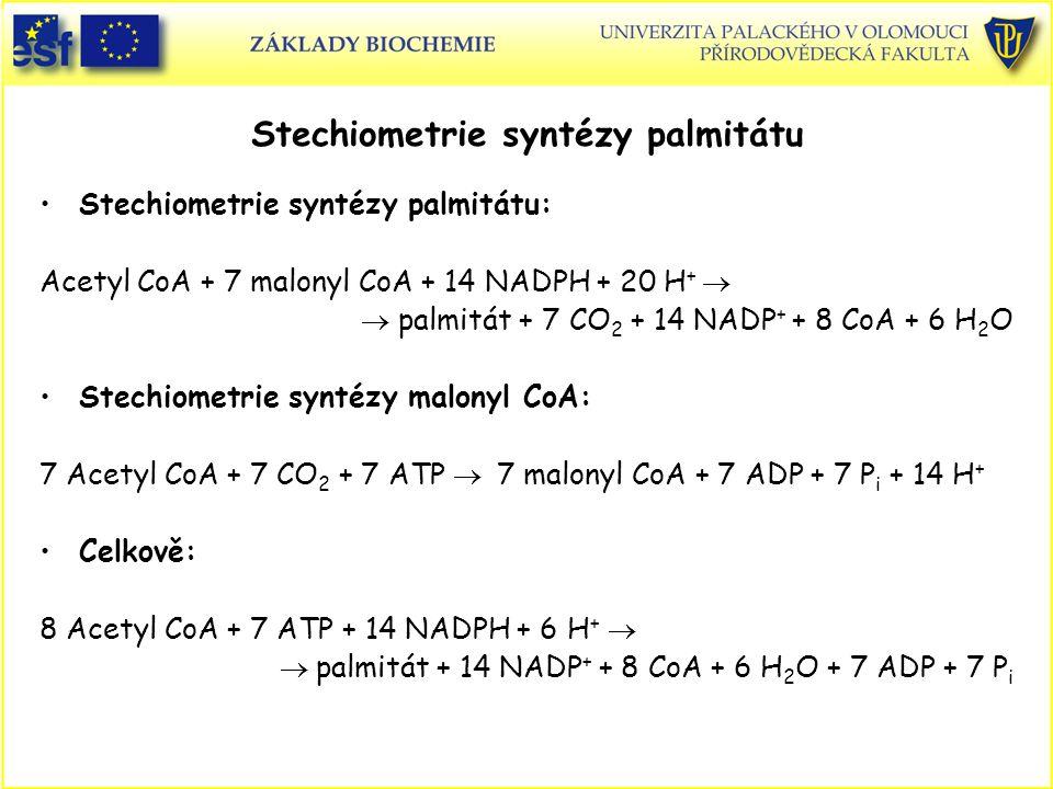 Stechiometrie syntézy palmitátu Stechiometrie syntézy palmitátu: Acetyl CoA + 7 malonyl CoA + 14 NADPH + 20 H +   palmitát + 7 CO 2 + 14 NADP + + 8 CoA + 6 H 2 O Stechiometrie syntézy malonyl CoA: 7 Acetyl CoA + 7 CO 2 + 7 ATP  7 malonyl CoA + 7 ADP + 7 P i + 14 H + Celkově: 8 Acetyl CoA + 7 ATP + 14 NADPH + 6 H +   palmitát + 14 NADP + + 8 CoA + 6 H 2 O + 7 ADP + 7 P i