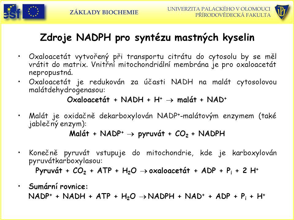 Zdroje NADPH pro syntézu mastných kyselin Oxaloacetát vytvořený při transportu citrátu do cytosolu by se měl vrátit do matrix. Vnitřní mitochondriální