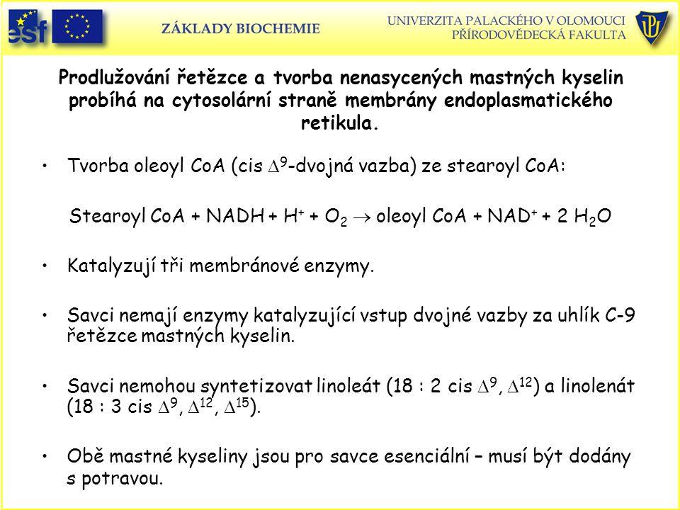 Prodlužování řetězce a tvorba nenasycených mastných kyselin probíhá na cytosolární straně membrány endoplasmatického retikula. Tvorba oleoyl CoA (cis