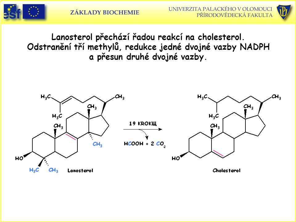 Lanosterol přechází řadou reakcí na cholesterol. Odstranění tří methylů, redukce jedné dvojné vazby NADPH a přesun druhé dvojné vazby.