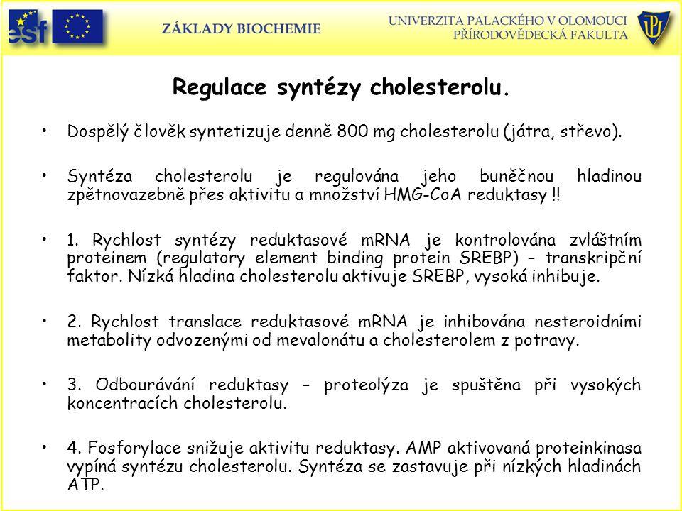 Regulace syntézy cholesterolu. Dospělý člověk syntetizuje denně 800 mg cholesterolu (játra, střevo). Syntéza cholesterolu je regulována jeho buněčnou
