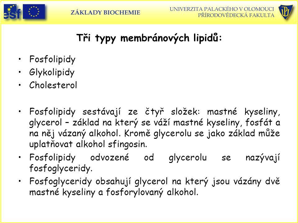 Tři typy membránových lipidů: Fosfolipidy Glykolipidy Cholesterol Fosfolipidy sestávají ze čtyř složek: mastné kyseliny, glycerol – základ na který se váží mastné kyseliny, fosfát a na něj vázaný alkohol.