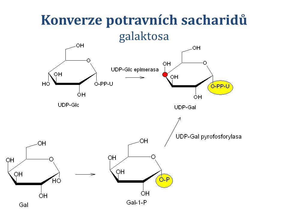 Konverze potravních sacharidů galaktosa