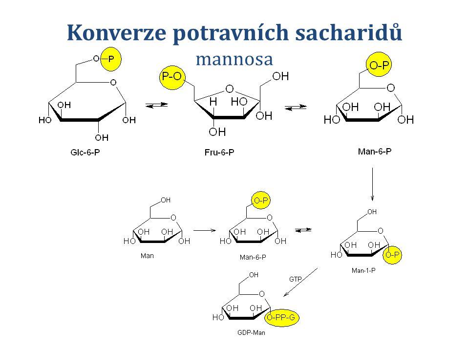 Konverze potravních sacharidů mannosa