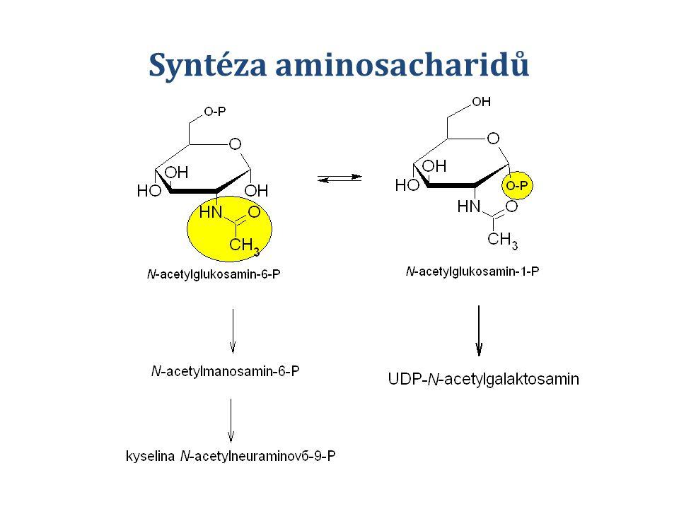 Dělení glykoproteinů 1.O-glykosidická vazba 2.N-glykosidická vazba 3.Glykosylfosfatidylinositol vázané (GPI)