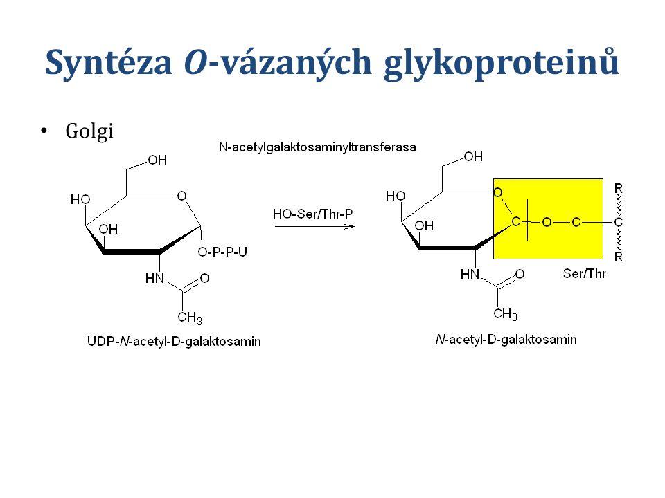 Syntéza O-vázaných glykoproteinů Golgi