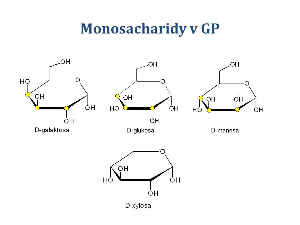 Monosacharidy v GP