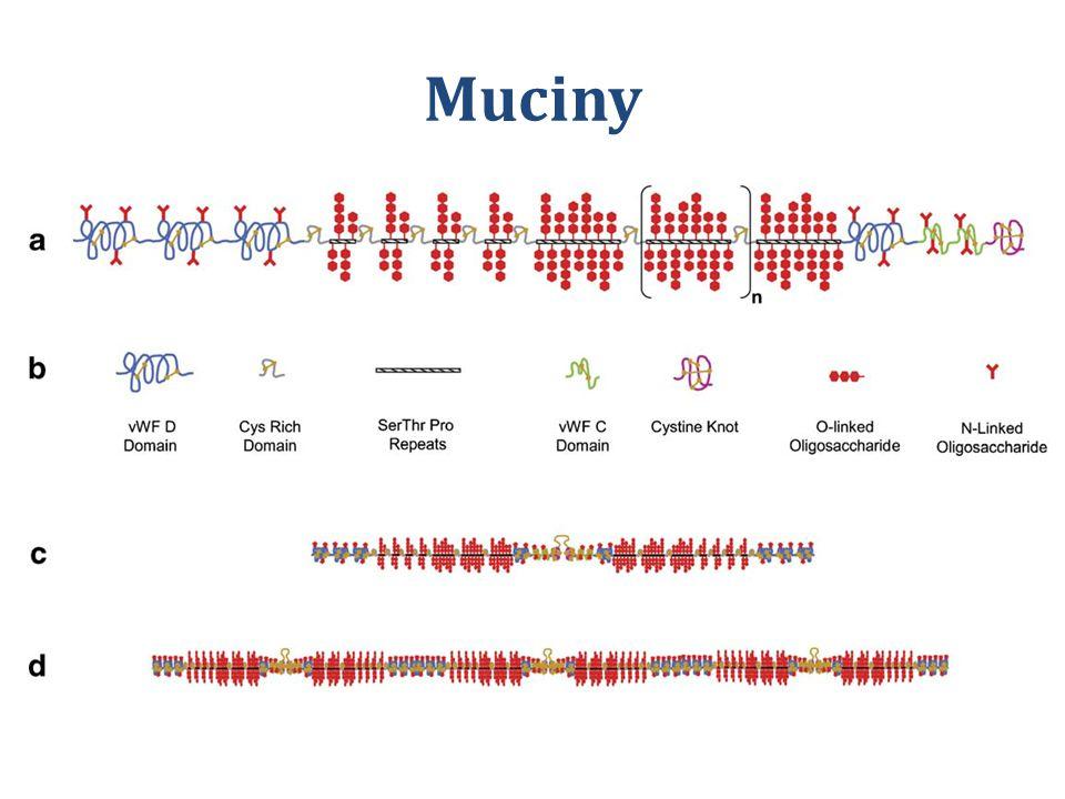 Muciny
