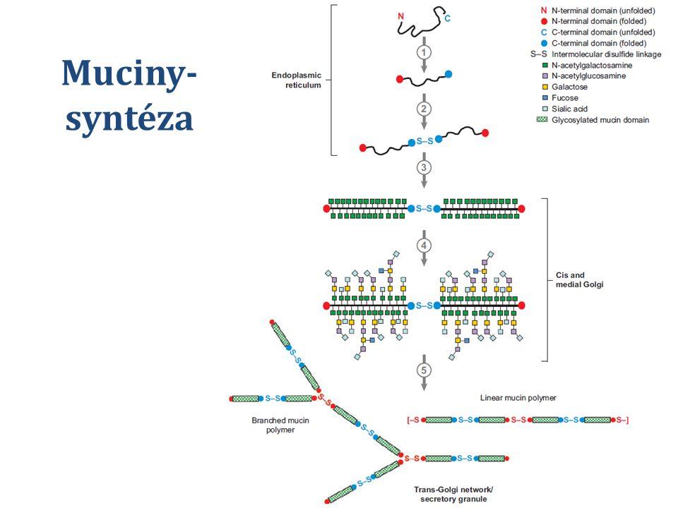 Muciny- syntéza