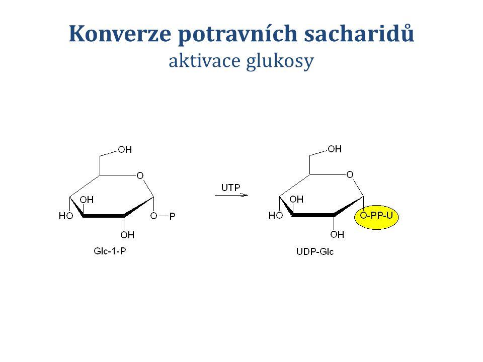 Konverze potravních sacharidů aktivace glukosy