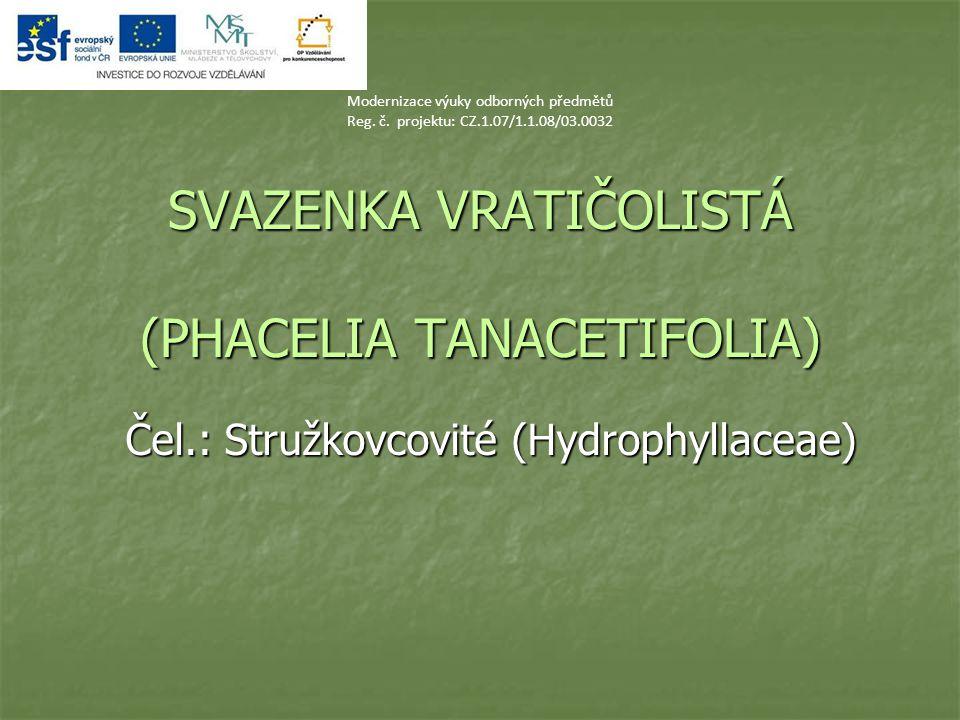 SVAZENKA VRATIČOLISTÁ (PHACELIA TANACETIFOLIA) Čel.: Stružkovcovité (Hydrophyllaceae) Modernizace výuky odborných předmětů Reg. č. projektu: CZ.1.07/1