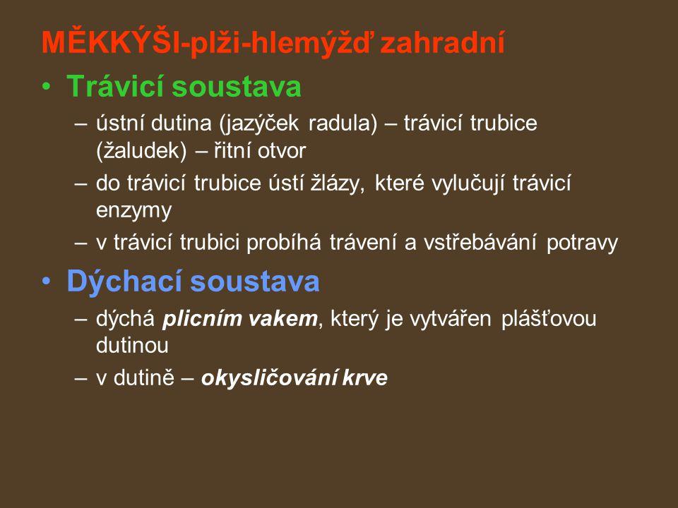 MĚKKÝŠI-plži-hlemýžď zahradní Trávicí soustava –ústní dutina (jazýček radula) – trávicí trubice (žaludek) – řitní otvor –do trávicí trubice ústí žlázy, které vylučují trávicí enzymy –v trávicí trubici probíhá trávení a vstřebávání potravy Dýchací soustava –dýchá plicním vakem, který je vytvářen plášťovou dutinou –v dutině – okysličování krve