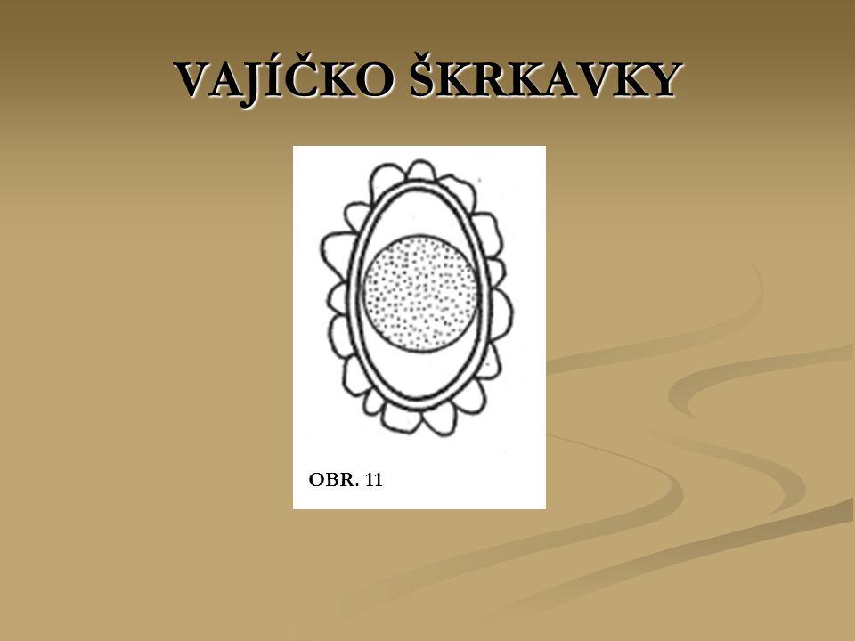 VAJÍČKO ŠKRKAVKY OBR. 11