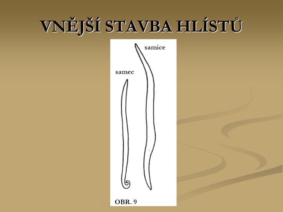 VNĚJŠÍ STAVBA HLÍSTŮ OBR. 9 samec samice