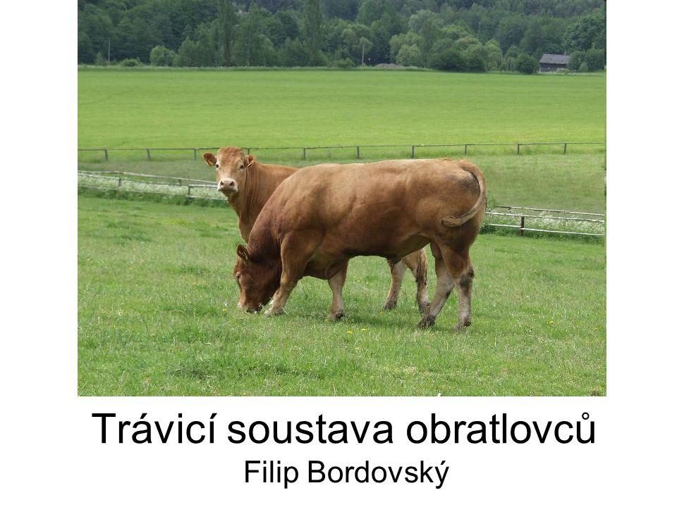 Trávicí soustava obratlovců Filip Bordovský