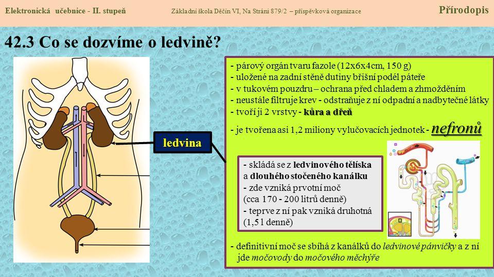 42.3 Co se dozvíme o ledvině? Elektronická učebnice - II. stupeň Základní škola Děčín VI, Na Stráni 879/2 – příspěvková organizace Přírodopis ledvina