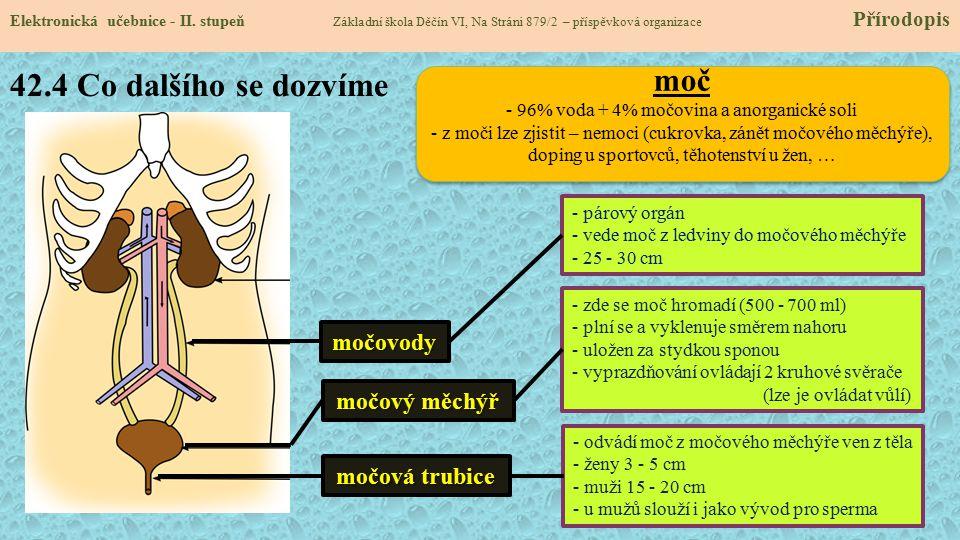 42.4 Co dalšího se dozvíme Elektronická učebnice - II. stupeň Základní škola Děčín VI, Na Stráni 879/2 – příspěvková organizace Přírodopismočovody moč