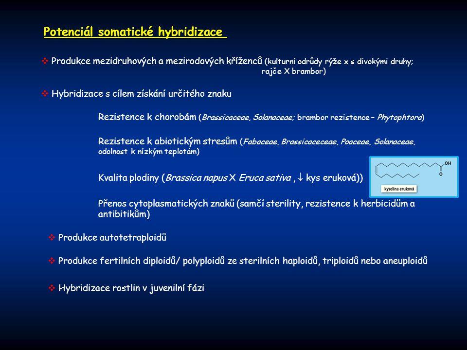 Potenciál somatické hybridizace  Hybridizace s cílem získání určitého znaku  Produkce mezidruhových a mezirodových kříženců (kulturní odrůdy rýže x