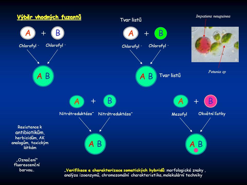Výběr vhodných fuzantů AB + Chlorofyl - A B A B + Chlorofyl - A B A B + Resistence k antibiotikům, herbicidům, AK analogům, toxickým látkám A B AB + M