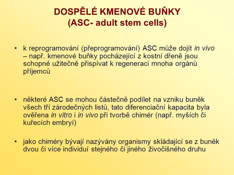 DOSPĚLÉ KMENOVÉ BUŇKY (ASC- adult stem cells) k reprogramování (přeprogramování) ASC může dojít in vivo – např. kmenové buňky pocházející z kostní dře