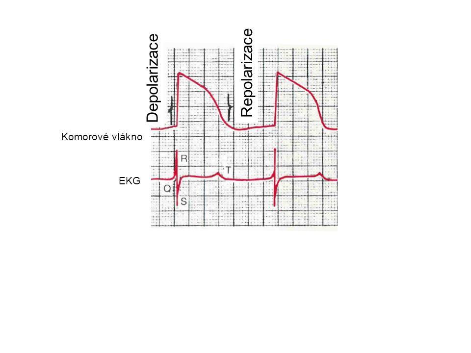 Depolarizace Repolarizace Komorové vlákno EKG