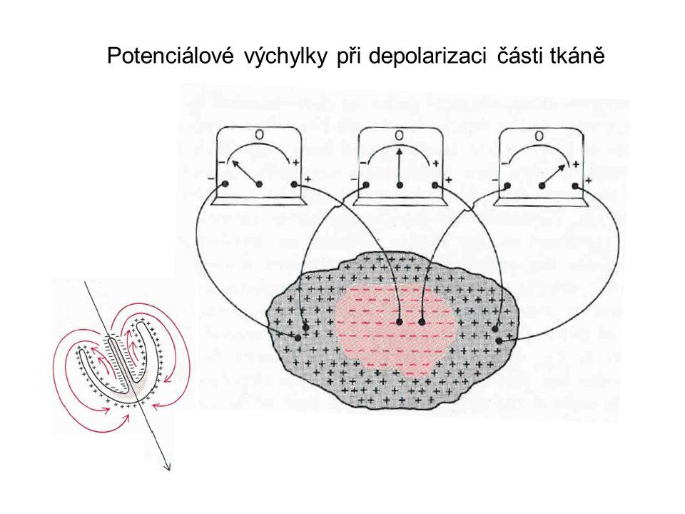 Potenciálové výchylky při depolarizaci části tkáně