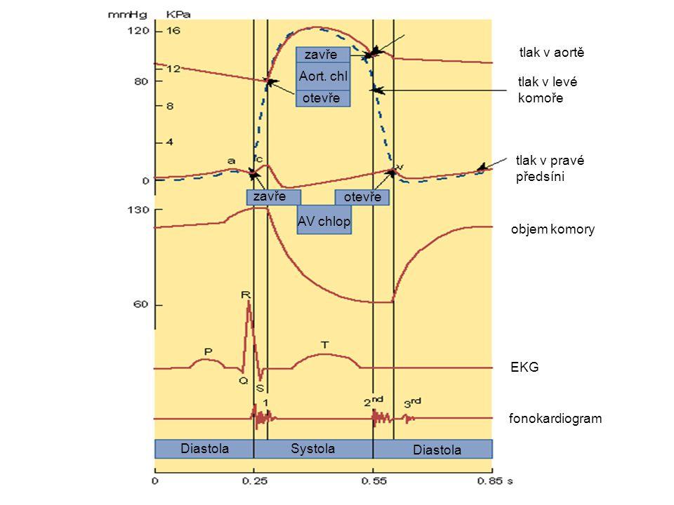 Systola Diastola Aort. chl otevře zavře AV chlop zavře otevře fonokardiogram EKG objem komory tlak v pravé předsíni tlak v levé komoře tlak v aortě