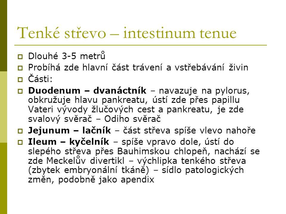 Tenké střevo – intestinum tenue  Dlouhé 3-5 metrů  Probíhá zde hlavní část trávení a vstřebávání živin  Části:  Duodenum – dvanáctník – navazuje n