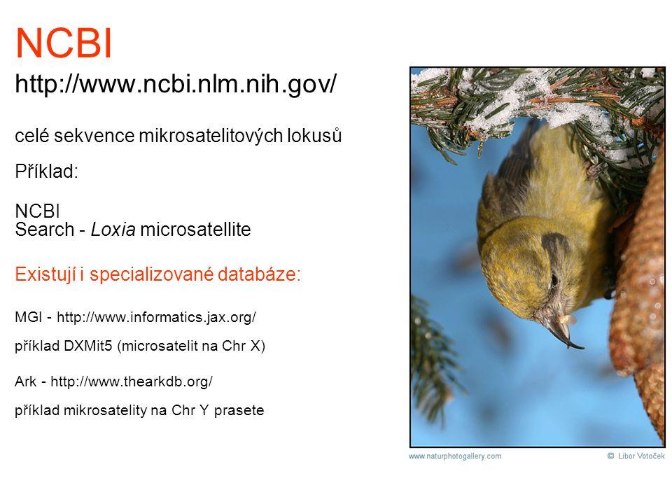 NCBI http://www.ncbi.nlm.nih.gov/ celé sekvence mikrosatelitových lokusů Příklad: NCBI Search - Loxia microsatellite Existují i specializované databáz