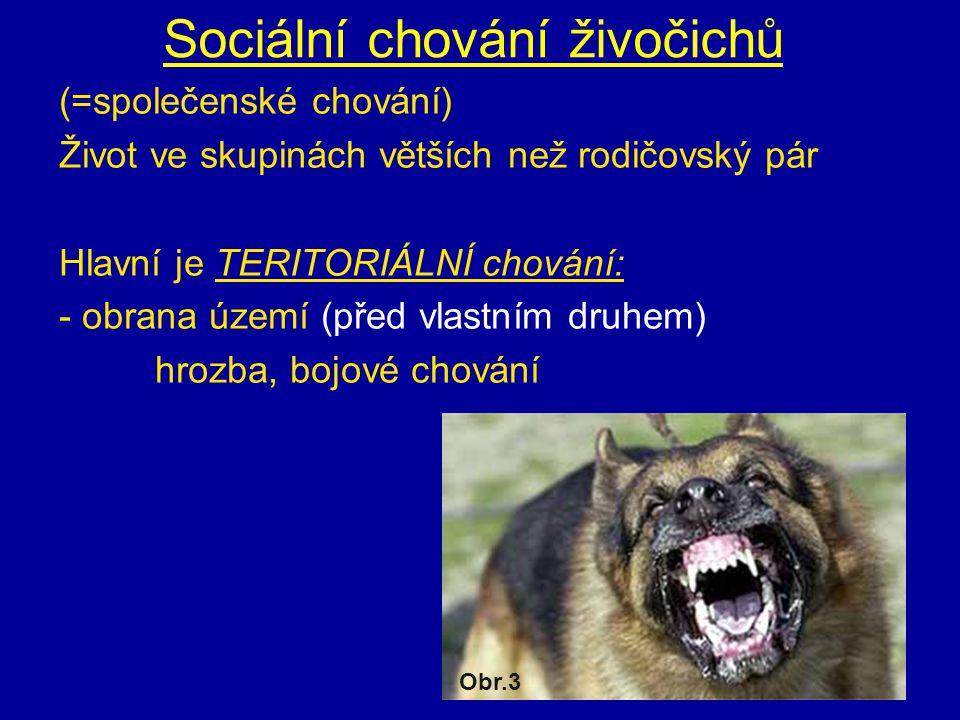 Sociální chování živočichů (=společenské chování) Život ve skupinách větších než rodičovský pár Hlavní je TERITORIÁLNÍ chování: - obrana území (před vlastním druhem) hrozba, bojové chování Obr.3