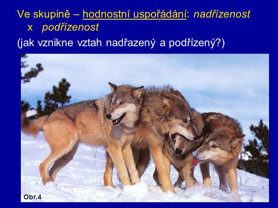 Ve skupině – hodnostní uspořádání: nadřízenost x podřízenost (jak vznikne vztah nadřazený a podřízený?) Obr.4