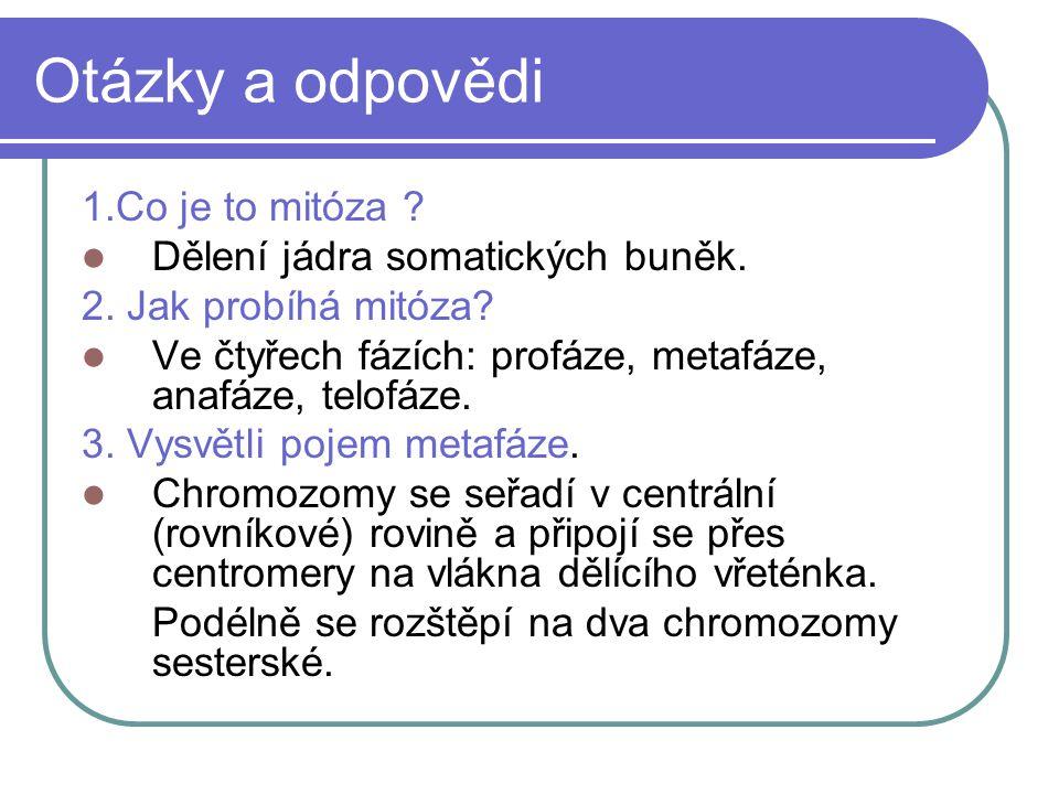 Otázky a odpovědi 1.Co je to mitóza . Dělení jádra somatických buněk.